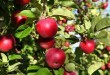 Be Careful When Comparing Apples to Apple Trees